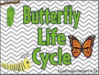 Interactive Science Notebook Life Cycle of a Butterfly
