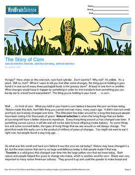 Intro to Evolution, The Story of Corn - Engaging Science Reading