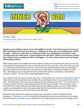 Intro to The Ear and Sound, Inner Ear - Engaging Science Reading