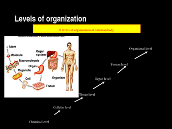 Introduction to Anatomy and Physiology (Chapter 1)