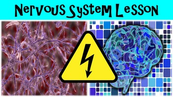 Introduction to the Nervous System Lesson with Power Point