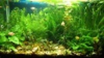 Invasive species lab using Aquatic model - AP level pt 4