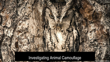 Investigating Animal Camouflage Powerpoint Presentation
