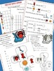Itsy Bitsy Spider, Math, Learning Cube, Roll, Graph and Co
