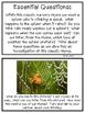 Itsy Bitsy Spider Investigation