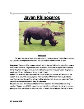 Javan Rhino - endangered extinct - information facts quest