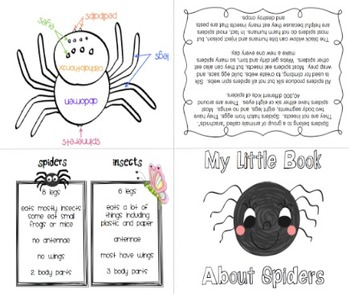 Journey Series:  Diary Of A Spider