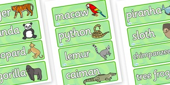 Jungle & Rainforest Word Cards