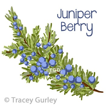 Juniper Berry Branch - juniper berry clip art Printable Tr