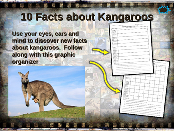 KANGAROOS - visually engaging PPT w facts, video links, ha