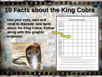 KING COBRA: 10 facts. Fun, engaging PPT (w links & free gr