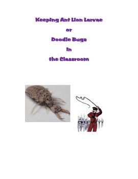 Keeping Ant Lion Larvae or Doodle Bugs in the Classroom