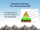 Keystone Species: The Yellowstone Wolf eBook