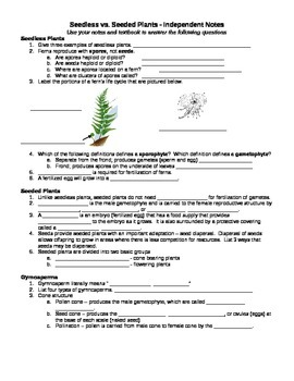 Kingdom Plantae Worksheet