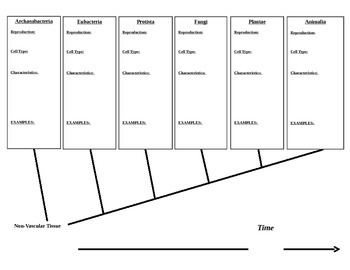 Kingdoms Cladogram - Note Taking Activity