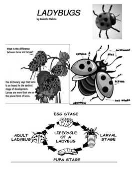 LADYBUGS INFORMATIONAL TEXT WITH CLOSE READING (FCAT FSA P