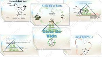 Power Point Presentation LIfe Cycle- Ciclo de vida (Spanish)