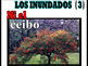 LOS INUNDADOS #1 CANCION  PPT