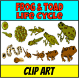 Frogs lifecycle and habitat Clip Art
