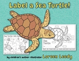Label a Sea Turtle! {Body Parts Diagram}