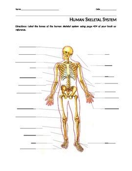 Label the Bones of the Skeletal System