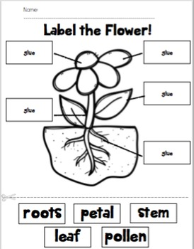 Label the Flower