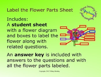 Label the Flower Parts Diagram and Corresponding Questions