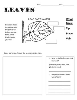 Label the Leaf