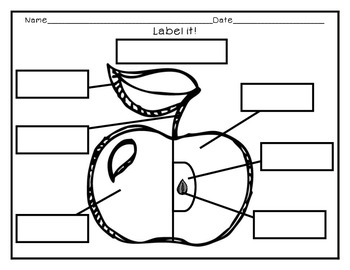 Label the Parts of an Apple