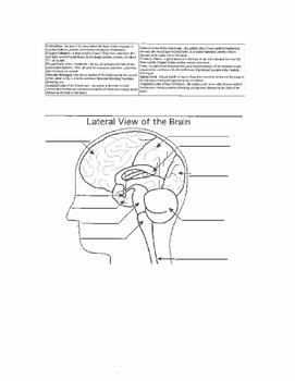 Labeling Activity for Brain & Neuron