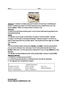 Labrador Duck - Extinct - Review Article Questions Vocabul