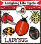 Ladybug Life Cycle Clip Art-Color and B&W-40 items!
