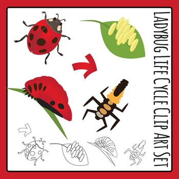 Ladybug Life Cycle Clip Art Set for Commercial Use
