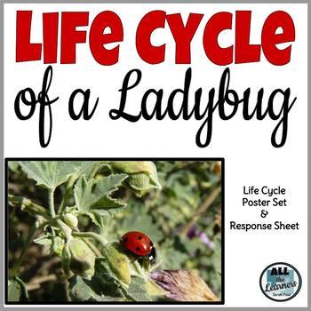 Ladybug Life Cycle Poster