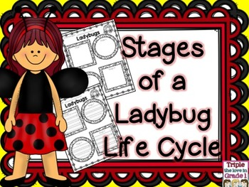FREE Ladybug Lifecycle/Stages of a Ladybug Lifecycle