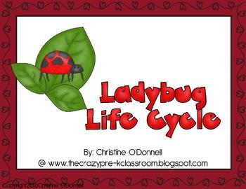 Ladybug life cycle: teacher book, minibook, craftivity, an
