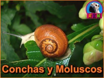 Las Conchas y Los Moluscos - Presentación en PowerPoint y