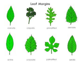 Leaf Margins: Three Part Cards