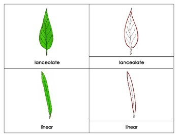 Leaf Shapes Three Part Cards