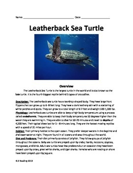 Leatherback Sea Turtle - Review Article - Facts Info Quest