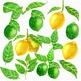 Lemon Scent Lemons Watercolor Clipart Set