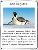 Les manchots - textes non-fiction // non-fiction texts - penguins