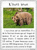 Les ours - textes non-fiction // non-fiction texts - bears