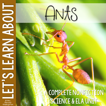 Let's Learn About: Ants