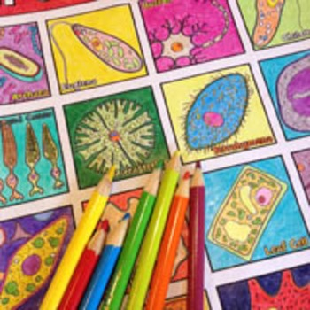 """Cell Diversity and Organelles: """"Let's Cell-ebrate!"""" Colori"""