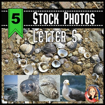 Letter S Stock Photos - Seal, Sea, Seagull, Seashells in Sand