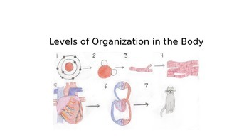 Level of Body Organization Powerpoint and Guided Notes