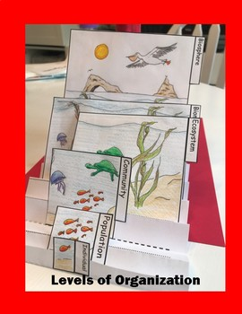 Levels of Organization Foldable for Journal