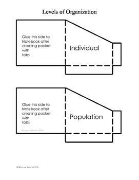 Levels of Organization Pockets