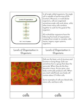 Levels of Organization in Organisms - Three Part Cards